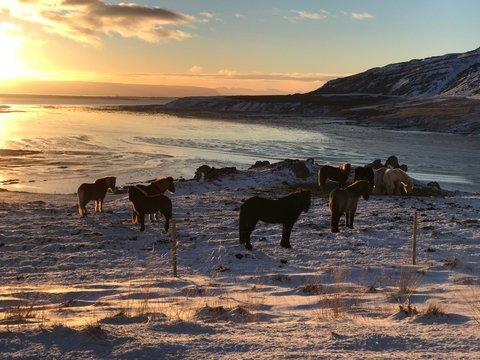 Horses On Beach Against Sky During Sunset