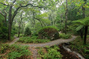Lush and verdant natural parkland at the Pena Park surrounding the Pena Palace (Palacio Nacional da Pena) in Sintra, Portugal.