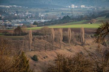 Pappeln im Seitenlicht vor grüner Wiese und Siedlung schwäbische Alb