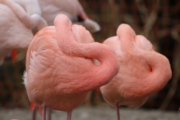 In de dag Flamingo Close-Up Of Flamingoes