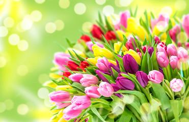 Tulip Flowers Fresh spring bouquet blurred bokeh background Fototapete