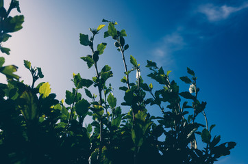 green leaves and blue sky Wall mural