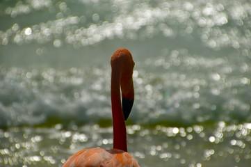 In de dag Flamingo Close-Up Of Flamingo Against Sea