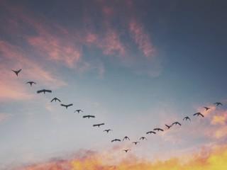 Fototapeta Low Angle View Of Birds Flying Against Sky