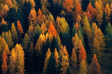 Dolomites Autumn foliage