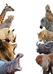 Group of African safari animals together