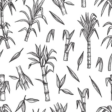 Sugar plant seamless pattern. Hand drawn sugarcane vector background. Agriculture production sketch texture. Illustration sugar nature cane, botanic tropic sugarcane