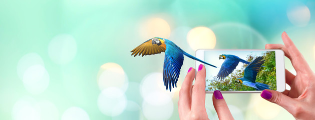 Female hand holding a smartphone with macaw parrot flying coming out from the screen
