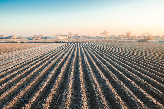 Winter farming field ready for new planting season. Spring sowing campaign. Agriculture and agribusiness. Protection from spring frosts. Cultivation of fields. Convertible husbandry. Farm landscape