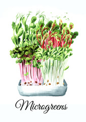 Microgreens. Vegan and healthy eating concept. Sprouting Microgreen, Seed Germination. Hand drawn watercolor illustration, isolated on white background