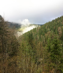 woods power - cloud, fog like steam over mountains covered forest
