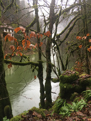 nature energy - poetic mist over river with mossy trees, France