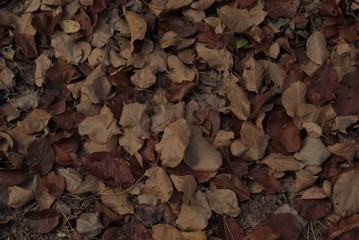 autumn leaves are brown and brown