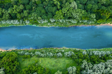 top view of summer green trees with a river Fotomurales
