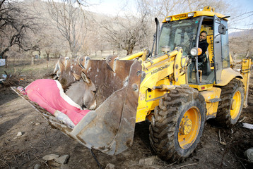 An excavator carries an injured donkey, after an earthquake in Cevrimtas