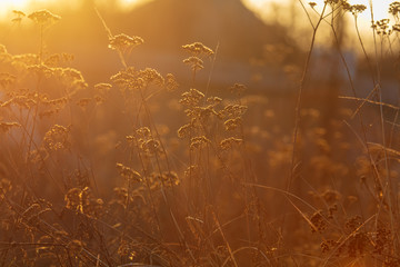 Photo sur Toile Brique Dry grass at dawn of the sun