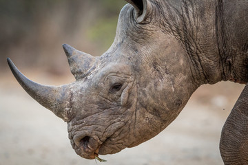 Close-Up Of rhinoceros on field at forest