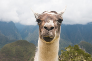 Photo sur Plexiglas Lama Portrait Of llama Against Mountain Range