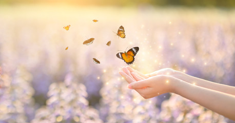 The girl frees the butterfly from the jar, golden blue moment Concept of freedom