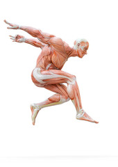 muscleman anatomy heroic body jumping in white background