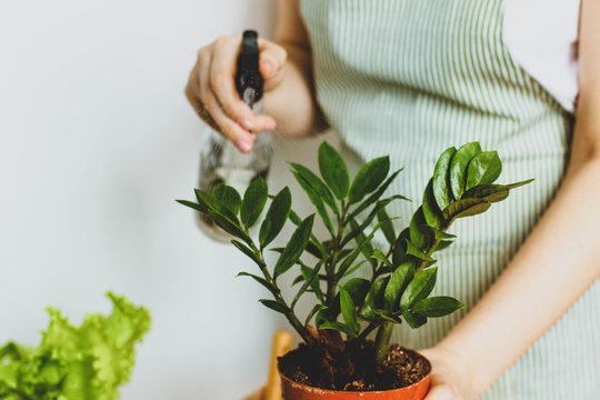 Woman watering a potted plant, caring for domestic plants