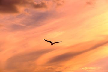 Fototapeta Low Angle View Of Silhouette Bird Flying Against Orange Sky