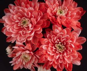 Poster Dahlia bouquet of red flowers