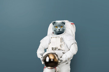 Funny cat astronaut in a space suit with a helmet on a gray background. British cat spaceman. Creative idea
