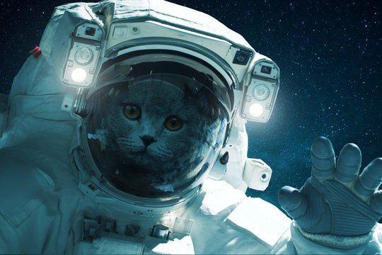 Space cat in a spacesuit with hand on a background of the starry sky. Beautiful cat in outer space. Travel concept