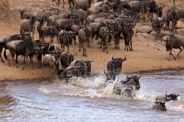 Wildebeests crossing Mara river at Kenya Wall mural