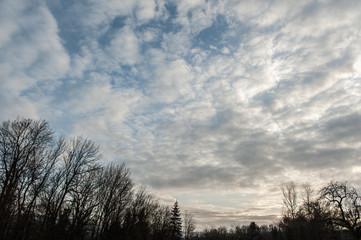 Wolkenhimmel bei Abenddämmerung mit Silhouette von Bäumen