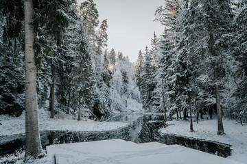 In de dag Blauwe jeans river in winter forest