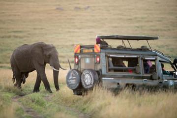 Wall Mural - Tourists enjoying game drive on safari Jeep in Masai Mara National Reserve