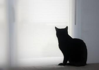 Photo sur Aluminium Chat chat noir de dos regardant par la fenêtre