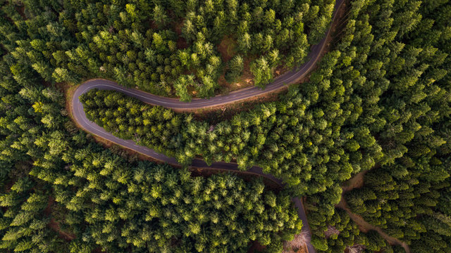 Drone aerial view from above of road through the green winter forest in Poiso, Madeira island, Portugal.