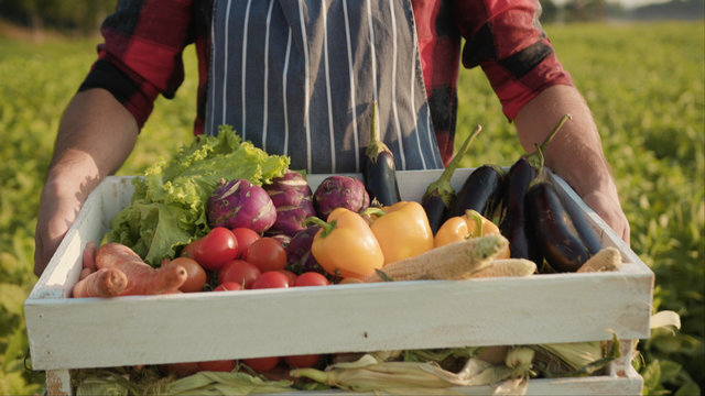 Close up handsome farmer is holding a box of organic vegetables stand look at camera at sunlight agriculture farm field harvest garden nutrition organic fresh outdoor slow motion