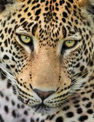 Printed kitchen splashbacks Panther Close-Up Portrait Of Tiger