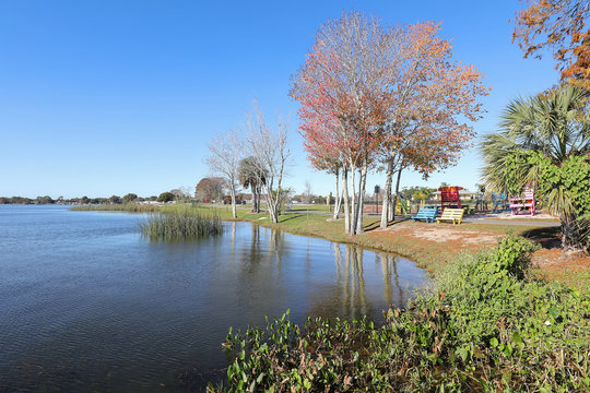 Florida red maple trees at Lake Dora in Wooten Park, Tavares, Florida.  Tavares is part of the Golden Triangle which includes Mount Dora and Eustes known for it's small town feel and natural beauty.