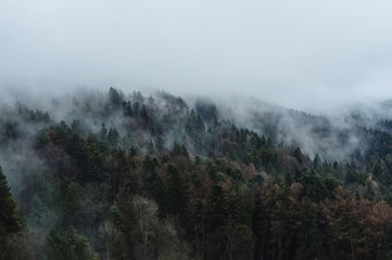 Deurstickers Bergen SCENIC VIEW OF FOREST AGAINST SKY DURING FOGGY WEATHER