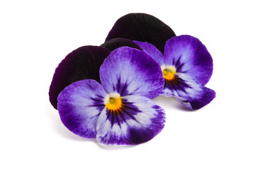 Photo sur Toile Pansies pansies isolated