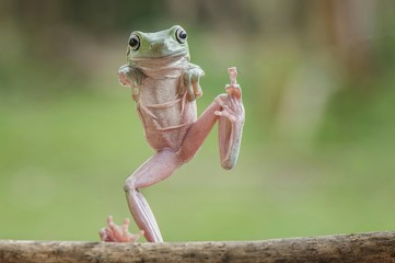 Full length portrait of frog standing on stick