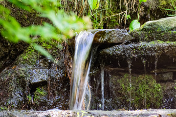 In de dag Bos rivier A small natural waterfall in the forest, among stones, branches and logs. There is a lot of green vegetation and moss around. The murmur of a pure natural stream flowing down to the source