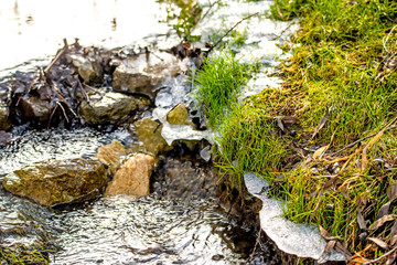 little creek in winter with ice and green plants Wall mural