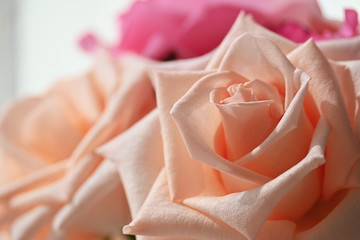 beautiful orange rose gold flower color blossom blooming in the morning day, image used for romantic love background