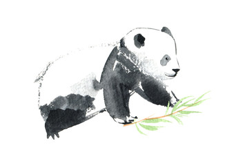 Panda and bamboo.Watercolor hand drawn illustration.White background.
