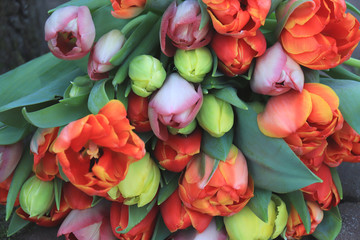 Fotorolgordijn Tulp Red and orange tulips