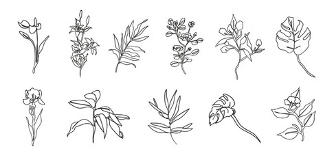 Botanical set of sketch flowers and branches. Drawn with textured, detailed outlines.
