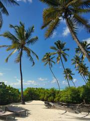 Kokospalmen am Strand in Jambiani Sansibar Karibikfeeling