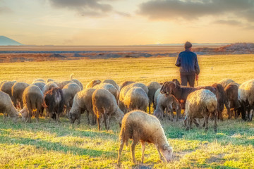 Deurstickers Schapen sheep and shepherd at sunset