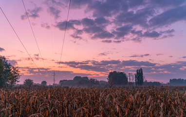 Sunrise over a crop field at countryside. Beautiful cloudy sky. High voltage cables and tower in the background.